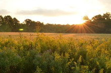 Sunrise Over Beautiful Country Field And Roadside Flowers