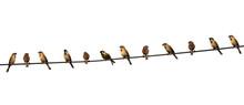 Group Of Birds On A Power  Lin...
