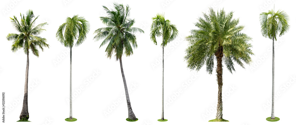 Fototapety, obrazy: Palm trees isolated collection on white background
