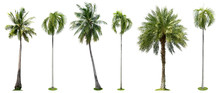 Palm Trees Isolated Collection...