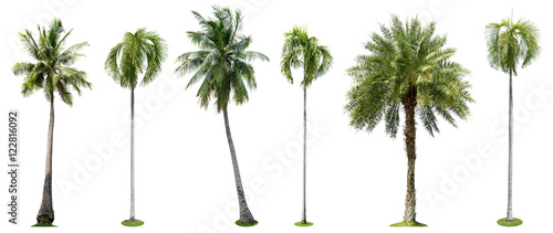 Staande foto Palm boom Palm trees isolated collection on white background
