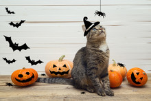 Cute Stripes Cat In A Witches Hat With Pumpkins, Spiders And Bat