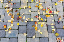 Stone Walkway In Park With Autumnal Fallen Beech Leaves On It