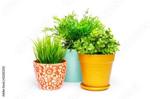 Tuinposter Planten Potted house plant isolated in white background
