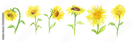 Fotomural Watercolor sunflower set on white background