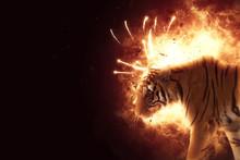 Blazzing Tiger On Black Backgr...
