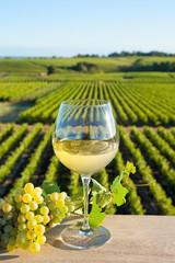 Panel Szklany Toskania Vin blanc dans le vignoble Français