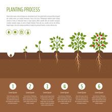 Gardening And Planting Infographic. Apple Tree. Organic Food. Flat Design, Vector Illustration.