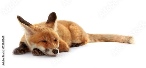 Photo  Beautiful fox cub lying isolated on white