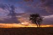 canvas print picture - Abendstimmung in der Kalahari, Afrika