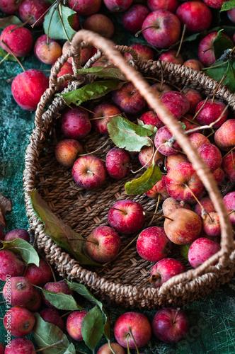 Photo  cestino con piccole mele selvatiche rosse e altre sparse su base verde