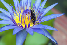 A Bug On Lotus