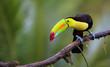 Leinwandbild Motiv Regenbogentukan in Costa Rica