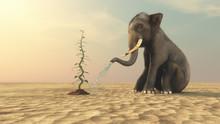 Elephant With A Beanstalk