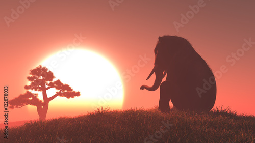 Poster Corail Silhouette of elephant and tree