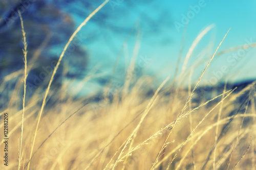 Tuinposter Turkoois vintage grass background