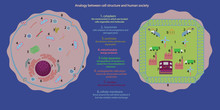 Illustration Of Analogy Between Cell Structure And Human Society....easy To Understand And Learn About Structure And Function Of Cell Parts...good For Education