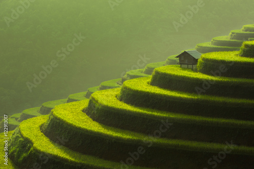 Fotobehang Rijstvelden Terraced rice field of Mu Cang Chai, Yenbai, Vietnam
