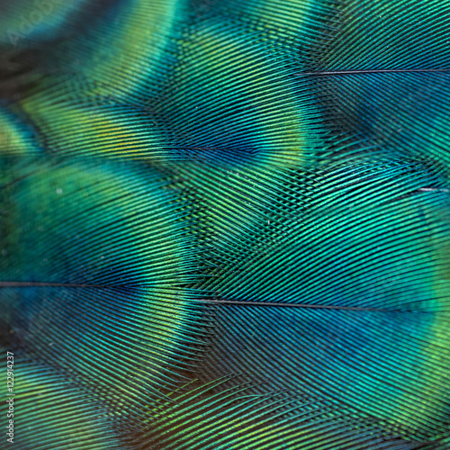 Fotografiet  close-up peacock feathers