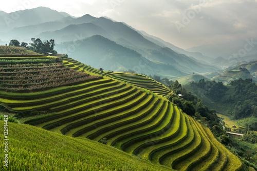 Fotobehang Rijstvelden Rice fields on terraced of Mu Cang Chai, YenBai, Vietnam. Rice f