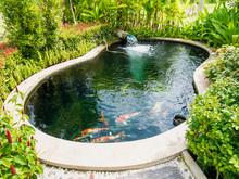 Koi Fish In Koi Pond In The Ga...