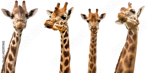 Giraffes isolated on white background Wallpaper Mural