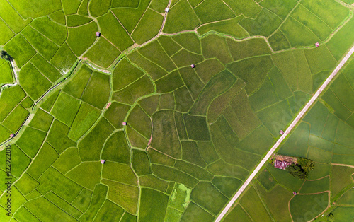 Rice farm Map, Bird Eye View Fotobehang
