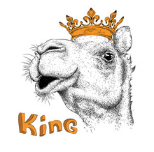 Hand Draw Image Portrait Of Camel In The Crown. Use For Print, Posters, T-shirts. Hand Draw Vector Illustration