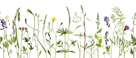 Fototapeta Przyprawy Watercolor drawing plants