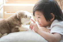 Asian Child Playing With Siberian Husky Puppy