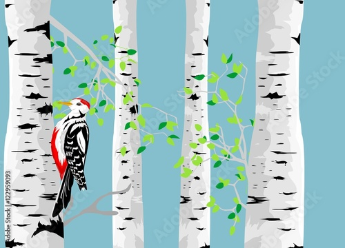 Canvas Prints Birds in the forest Birch tree colorful vector illustration and woodpecker.