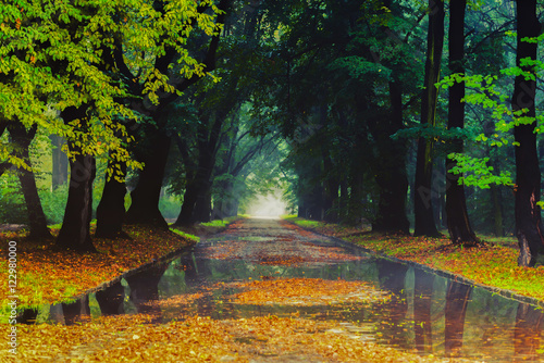 Foto op Canvas Herfst Autumn in the park with the morning fog