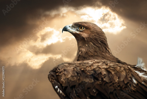 eagle portrait in sunset time