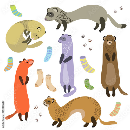 Photo  ferret, socks and paw prints vector illustration.