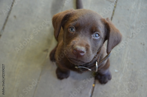 Pouting Puppy with soulful eyes Tablou Canvas