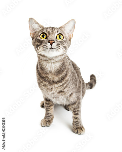 Papiers peints Rouge, noir, blanc Happy Smiling Young Cat Expressive Eyes