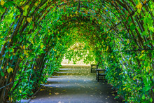 Walkway Covered By Green Leaves In Hyde Park