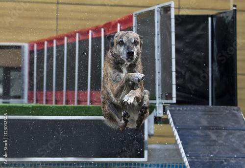 Aluminium Prints Dog Hond maakt een bommetje