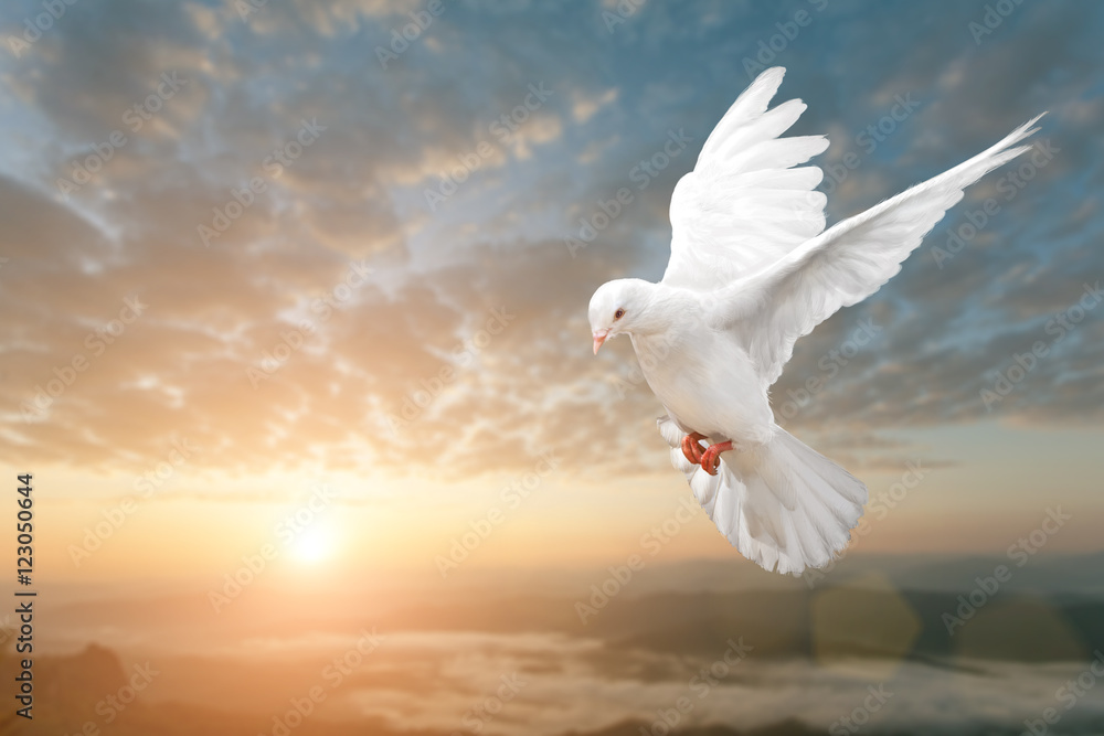White Dove on Beautiful sunset view