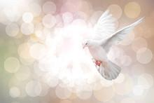 White Dove On Vintage Bokeh