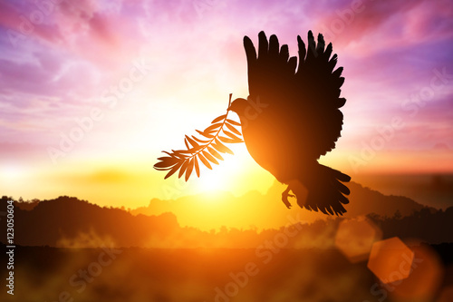 Foto En Lienzo - Silhouette of Dove carrying olive leaf branch