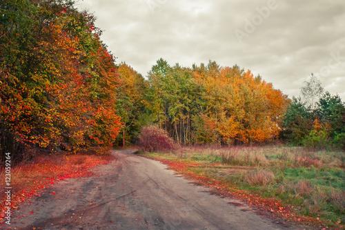 Foto op Canvas Herfst Kolory jesieni