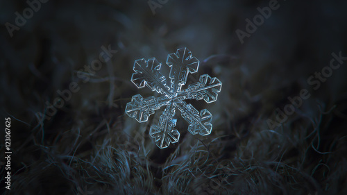 In de dag Macrofotografie Snowflake on dark textured background, panoramic version: macro photo of real snow crystal on black woolen fabric in natural light. This is big snowflake with simple shape and broad symmetrical arms.
