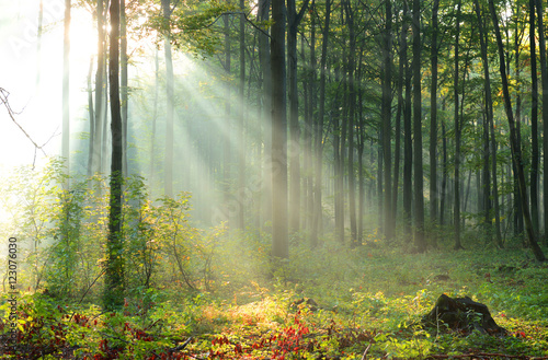 Fotobehang Natuur Beautiful morning in the forest
