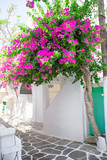 Fototapeta Kwiaty - The narrow streets with blue balconies, stairs, white houses and flowers in beautiful village in Greece. Beautiful architecture building exterior with cycladic style in Mykonos