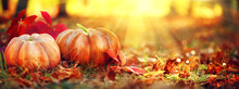 Autumn Halloween Pumpkins. Orange Pumpkins Over Bright Autumnal Nature Background