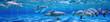Leinwanddruck Bild - Panorama of Underwater life. Dolphins