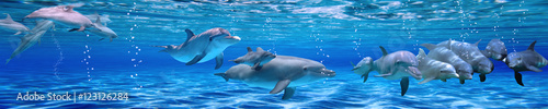 Spoed Foto op Canvas Panoramafoto s Panorama of Underwater life. Dolphins