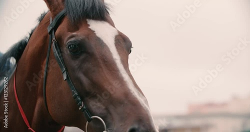 horse racing Stock Footage, Videos & Royalty Free horse