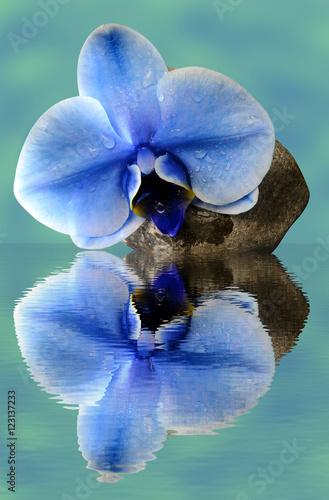 storczykowy-blekitny-kwiat-kamien-wodne-kropelki
